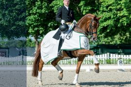Riding Horses and Foals at the Verden Auction in April