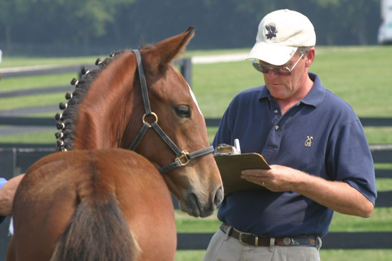 Foal Registration and Photo Submission Guide