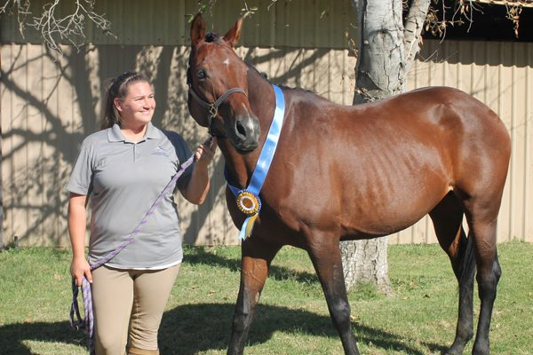 Thoroughbred and Arabian Mare Requirements
