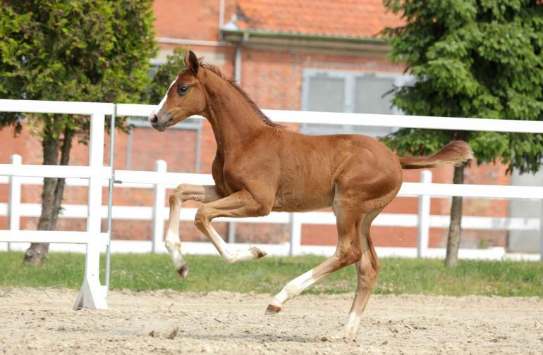 Young Stallion Sets Top Price
