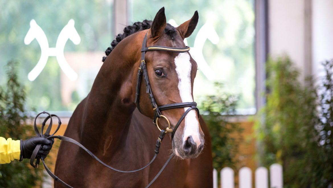 Jumping Stallions Present Themselves in a Modern Look