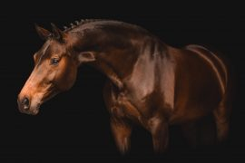 2020 AHS Sport Horse Breeding Awards Winners
