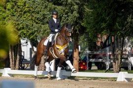 Hannoveraner Championships in Verden